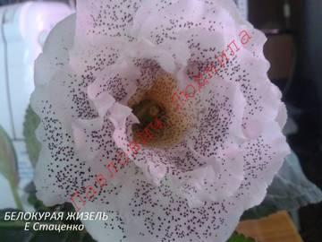 http://s8.uploads.ru/t/RpDcm.jpg
