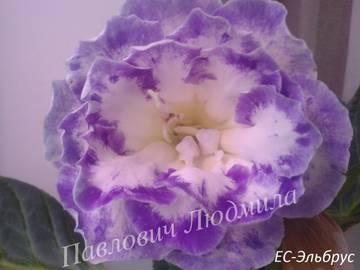 http://s8.uploads.ru/t/TAcK7.jpg