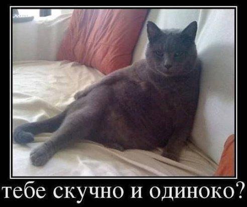 http://s8.uploads.ru/t/UdxkV.jpg