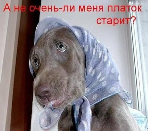 http://s8.uploads.ru/t/VWqO6.jpg