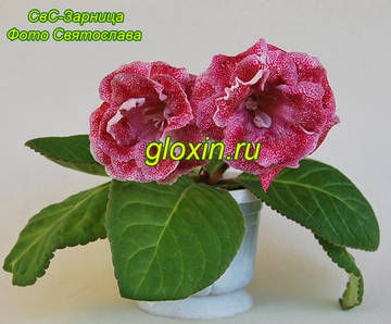 http://s8.uploads.ru/t/VcPqZ.jpg