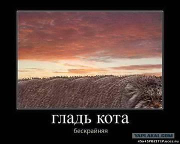 http://s8.uploads.ru/t/WEM0v.jpg