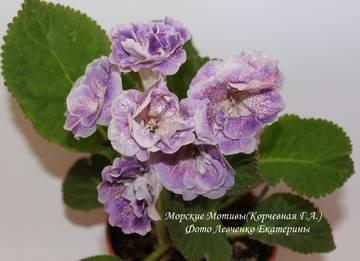 http://s8.uploads.ru/t/Wf6E0.jpg