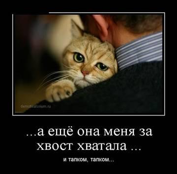 http://s8.uploads.ru/t/XdGN2.jpg