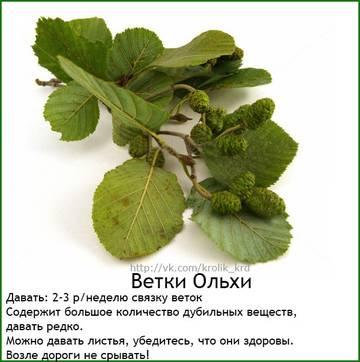 http://s8.uploads.ru/t/XnbOj.jpg