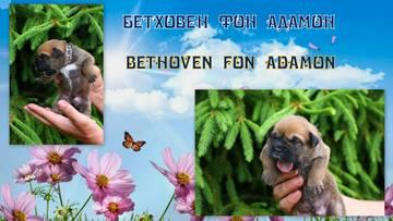 http://s8.uploads.ru/t/YIo2m.jpg