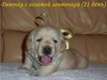 http://s8.uploads.ru/t/YWEks.jpg