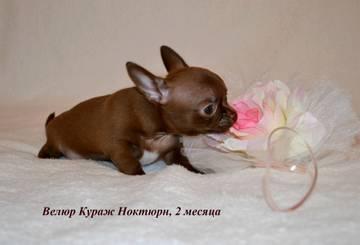 http://s8.uploads.ru/t/ZBizK.jpg