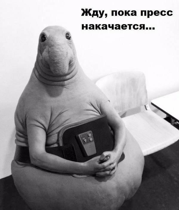 http://s8.uploads.ru/t/ZoHdD.jpg