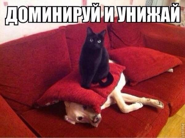 http://s8.uploads.ru/t/bJfju.jpg