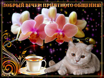 http://s8.uploads.ru/t/cHLqX.jpg