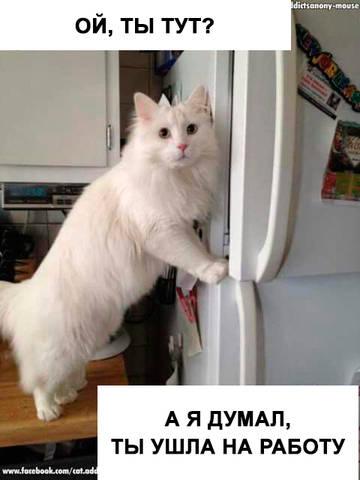 http://s8.uploads.ru/t/cnQzm.jpg