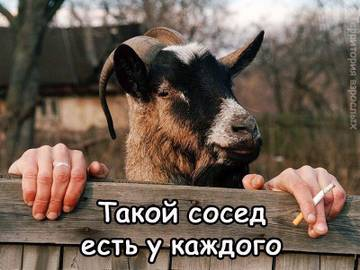 http://s8.uploads.ru/t/cuY9D.jpg