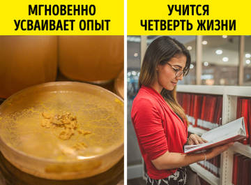 http://s8.uploads.ru/t/dx35u.jpg