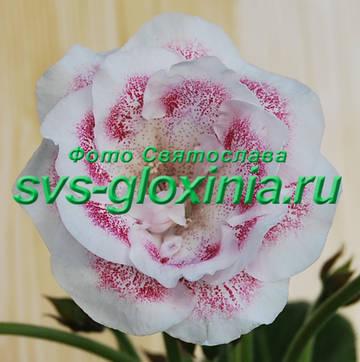 http://s8.uploads.ru/t/evT1r.jpg