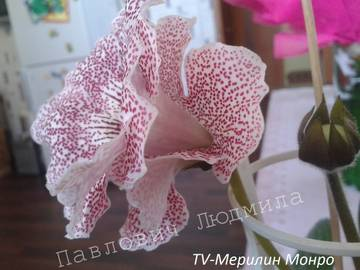 http://s8.uploads.ru/t/fLsCZ.jpg