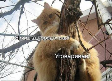 http://s8.uploads.ru/t/fSG8i.jpg