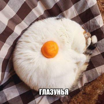http://s8.uploads.ru/t/fZNS0.jpg