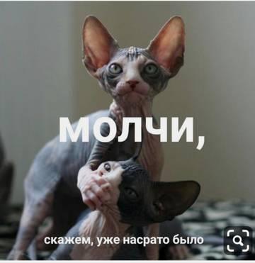 http://s8.uploads.ru/t/hP2L1.jpg