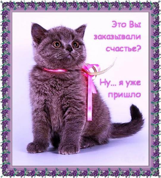 http://s8.uploads.ru/t/jClk2.jpg
