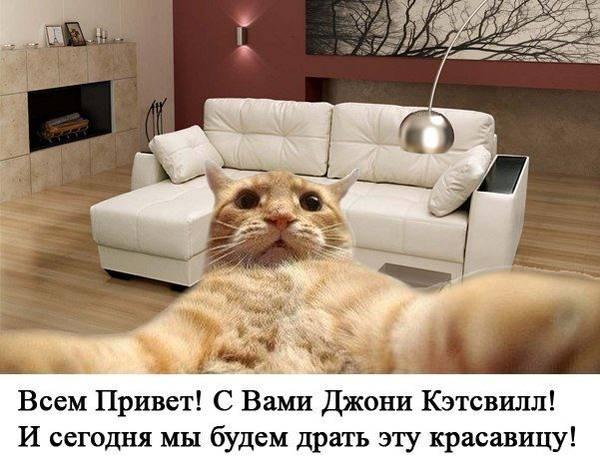 http://s8.uploads.ru/t/jcUdn.jpg