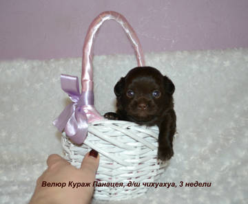http://s8.uploads.ru/t/kKfWj.jpg