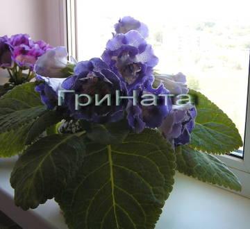 http://s8.uploads.ru/t/kSeYH.jpg