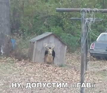 http://s8.uploads.ru/t/mJeYj.jpg