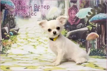 http://s8.uploads.ru/t/mOJpx.jpg