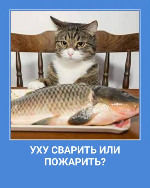 http://s8.uploads.ru/t/oLEeT.jpg