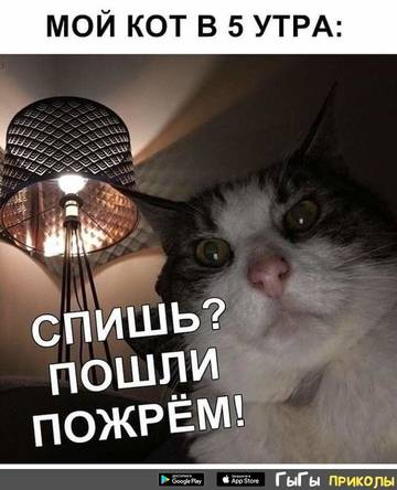 http://s8.uploads.ru/t/odGAP.jpg