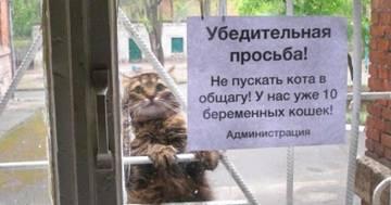 http://s8.uploads.ru/t/pE2zP.jpg
