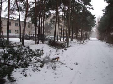 http://s8.uploads.ru/t/pN50V.jpg