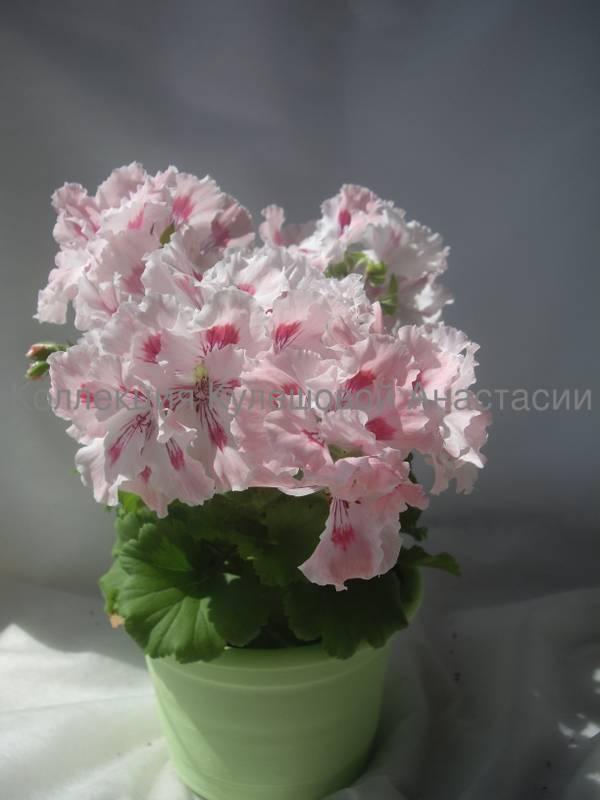 http://s8.uploads.ru/t/rCwJU.jpg