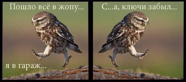 http://s8.uploads.ru/t/rk8i0.jpg