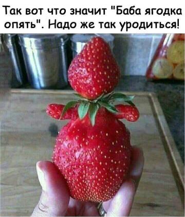 http://s8.uploads.ru/t/sFYXA.jpg