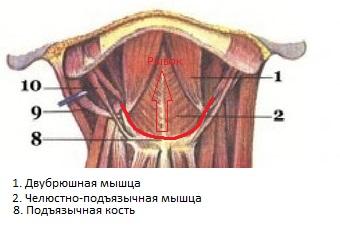 http://s8.uploads.ru/t/uDdUA.jpg