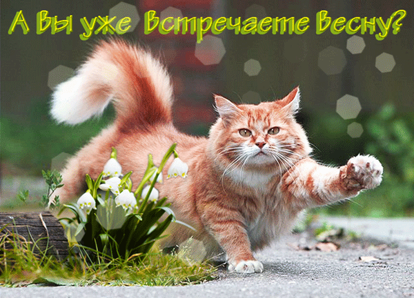 http://s8.uploads.ru/t/uSBHF.png
