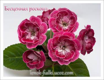 http://s8.uploads.ru/t/unArq.jpg