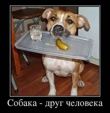 http://s8.uploads.ru/t/uxcHO.jpg
