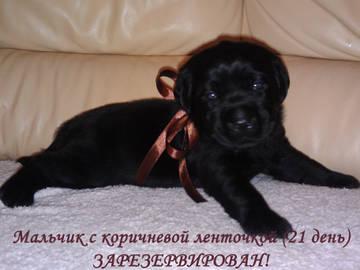 http://s8.uploads.ru/t/vU1sg.jpg