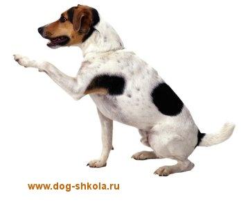 http://s8.uploads.ru/t/zeufp.jpg