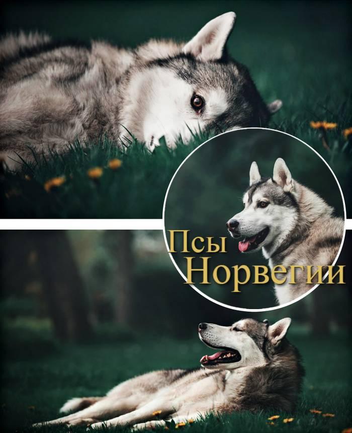 http://s8.uploads.ru/uCpeO.jpg