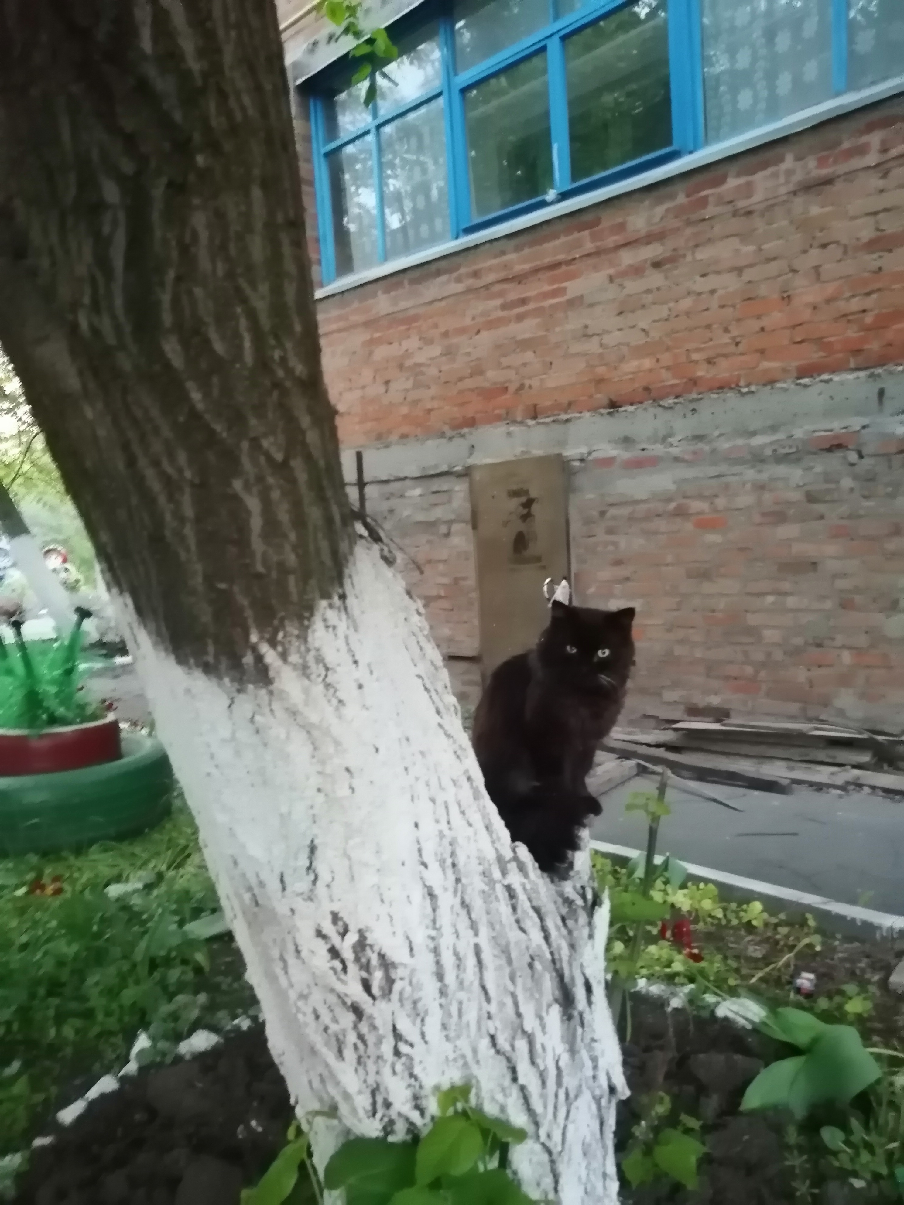 http://s8.uploads.ru/wA3ch.jpg