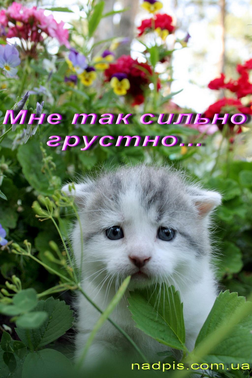 http://s8.uploads.ru/wtWap.jpg