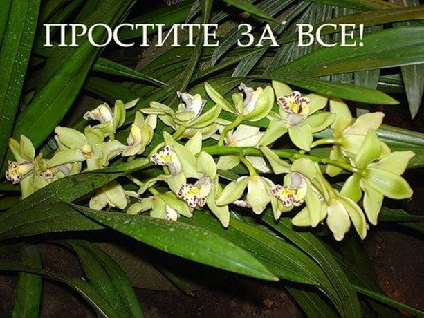 http://s8.uploads.ru/ywlsj.jpg