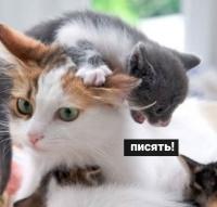 http://s8.uploads.ru/4d0re.jpg