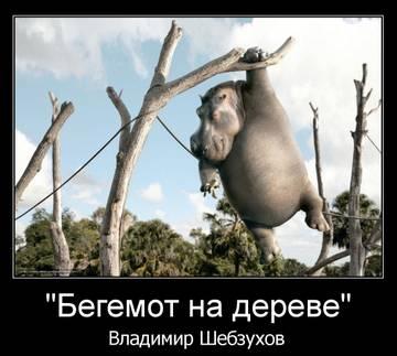 http://s8.uploads.ru/t/1TakJ.jpg