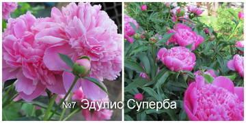 http://s8.uploads.ru/t/Cej7G.jpg