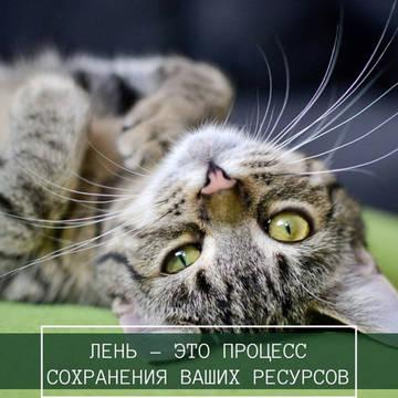 http://s8.uploads.ru/t/CoWS8.jpg